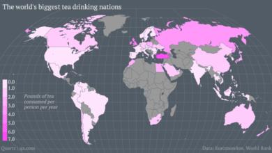 Photo of The Countries That Drink the Most Tea
