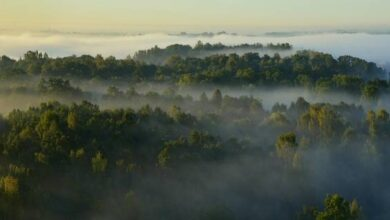 Photo of 7 Magic Outdoor Attractions in Deep Forest Green Lithuania